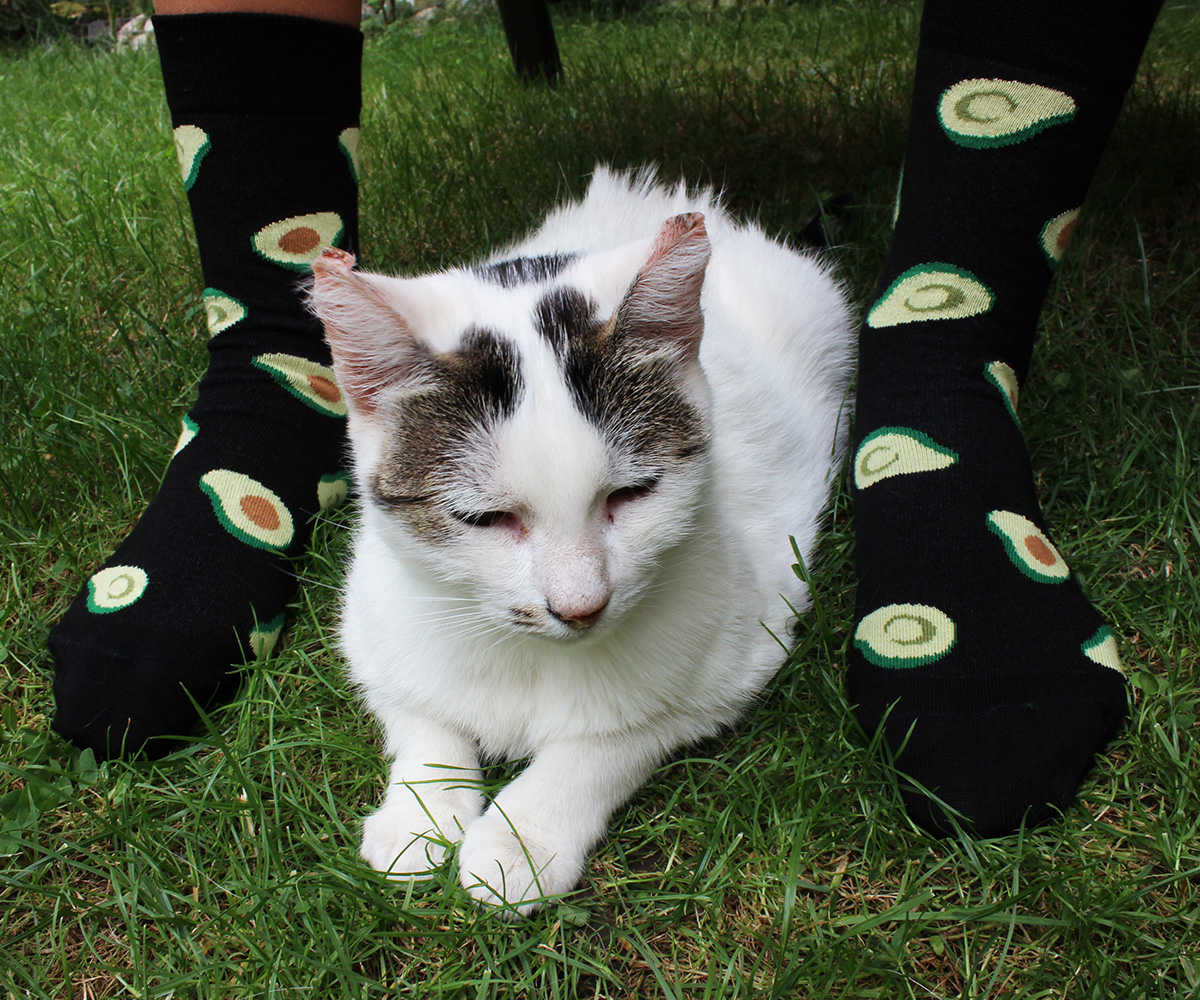 avocado socks with cat